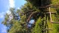 Saule blanc – Auderghem, Etang de la rue de la Vignette, autre: site semi-naturel –  02 Juin 2020