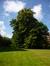 Tilleul argenté – Uccle, Parc Cherridreux, parc privé –  16 Juillet 2014