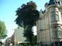 Hêtre pourpre – Uccle, Avenue Winston Churchill, 188 –  18 Août 2005