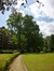 Tulipier de Virginie – Uccle, Parc Cherridreux, parc privé –  16 Juillet 2014