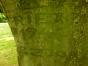 Hêtre pleureur – Uccle, Parc Cherridreux, parc privé –  16 Juillet 2014