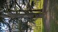 Cèdre bleu de l'Atlas – Bruxelles, Bois de la Cambre –  20 Avril 2021