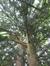 Venijnboom – Jette, Laarbeeklaan –  24 Mei 2016