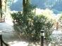 Buis – Auderghem, Parc du château Sainte Anne, Rue du Vieux Moulin, 103 –  30 Août 2005