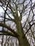 Chêne pédonculé – Auderghem, Parc du château de la Solitude, Avenue Charles Schaller, 54 –  12 Novembre 2015