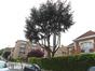 Cèdre bleu de l'Atlas – Auderghem, Boulevard des Invalides, 147 –  18 Mai 2017