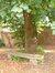 Tilleul à larges feuilles – Bruxelles, Rue du Ramier –  28 Septembre 2006