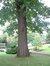 Chêne rouge d'Amérique – Bruxelles, Avenue Jean Sobieski, 13-15-17 –  02 Octobre 2006