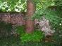 Tilleul à larges feuilles – Saint-Gilles, Ilôt Horta, Chaussée de Charleroi, 226 –  01 Juin 2007