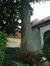 Hêtre pourpre – Uccle, Rue Gatti de Gamond, 174 –  11 Juillet 2007