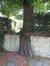 Tilleul à petites feuilles – Uccle, Avenue Moscicki, 20 –  03 Août 2007