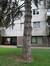 Pinus nigra 'Austriaca' – Vorst, Cervantesstraat, 6 –  21 August 2007