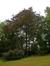 Rode beuk – Ukkel, Voormalig eigendom Pirenne, Floridalaan, 127 –  04 August 2015