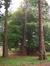 Cyprès chauve de Louisiane – Jette, Parc Titeca, Drève de Dieleghem, 79 –  08 Octobre 2007