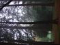 Châtaignier – Jette, Parc Titeca, Drève de Dieleghem, 79 –  08 Octobre 2007