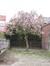 Magnolier de Soulange – Uccle, Chaussée de Waterloo, 1391 –  21 Avril 2010