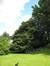 Hêtre à feuilles lacinées