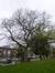 Hemelboom