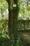 Frêne à fleurs/plumeux – Anderlecht, Parc Joseph Lemaire, Boulevard Théo Lambert –  17 Mai 2018