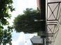 Saule pleureur – Anderlecht, Rue de Neerpede, 238 –  30 Juillet 2008