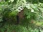 Tilleul à larges feuilles – Anderlecht, Rue de la Procession, 24 –  25 Août 2008