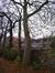Platane d'Orient – Forest, Avenue de Haveskercke, 78/84 –  19 Novembre 2008