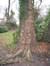 Platane à feuille d'érable – Watermael-Boitsfort, Parc de Jolymont, Rue Middelbourg, 70 –  26 Novembre 2009