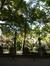 Frêne commun – Bruxelles, Square du Petit Sablon , Place du Petit Sablon –  24 Juillet 2014