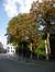 Marronnier commun – Bruxelles, Square du Petit Sablon , Place du Petit Sablon –  24 Juillet 2014