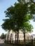 Tilleul à petites feuilles – Bruxelles, Square du Petit Sablon , Place du Petit Sablon –  24 Juillet 2014