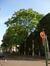 Ailante glanduleux – Bruxelles, Square du Petit Sablon , Place du Petit Sablon –  24 Juillet 2014