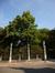 Tilleul commun – Bruxelles, Square du Petit Sablon , Place du Petit Sablon –  24 Juin 2014
