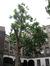 Platane à feuille d'érable – Anderlecht, Rue de Fiennes, 52-54 –  05 Juillet 2010