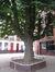 Marronnier commun – Anderlecht, Rue de Fiennes, 52-54 –  05 Juillet 2010