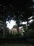 Hêtre pourpre – Uccle, Chaussée de Waterloo, 771 –  05 Août 2010
