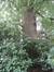 Acer saccharinum var. laciniatum – Uccle, Avenue Winston Churchill, 247 –  05 Août 2010