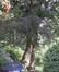 Hêtre pourpre – Uccle, Avenue Beau-Séjour, 73 –  09 Août 2010