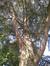 Cèdre bleu de l'Atlas – Uccle, Avenue de la Floride, 47 –  09 Août 2010