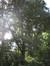 Chêne pédonculé – Uccle, Avenue de Messidor, 213-215 –  19 Août 2010