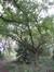 Forest Parc de Forest