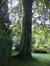 Hêtre pourpre – Uccle, Avenue du Vert Chasseur, 60 –  27 Septembre 2010