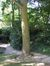 Arbre aux quarante écus – Uccle, Avenue Ptolémée, 12-14-16 –  22 Septembre 2010