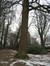Tulipier de Virginie – Jette, Parc Titeca, Avenue de l'Exposition Universelle, 425 –  08 Décembre 2010