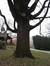 Noyer noir – Jette, Parc Titeca, Avenue de l'Exposition Universelle, 425 –  08 Décembre 2010