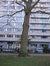 Gewone plataan – Brussel, Plantsoen de Meeûs op Brussel, de Meeûssquare –  09 February 2011