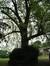 Erable argenté – Bruxelles, Parc Solvay Sports, Avenue du Pérou, 80 –  28 Avril 2011