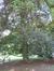 Hêtre pourpre – Bruxelles, Parc Solvay Sports, Avenue du Pérou, 80 –  30 Juin 2011