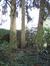 Epicea commun – Woluwé-Saint-Pierre, Avenue des Touristes, 39 –  13 Octobre 2011