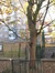 Erable sycomore – Schaerbeek, Boulevard Lambermont, 184-186 –  28 Novembre 2011