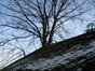 Tilleul à larges feuilles – Uccle, Avenue Hamoir, 45 –  08 Février 2012